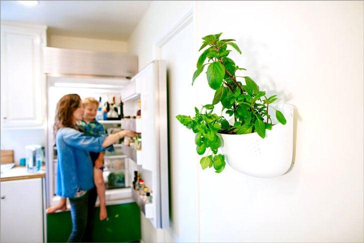 Living Wall Planters