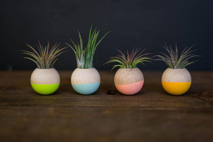 Mini Wooden Sphere Planters - unique planters