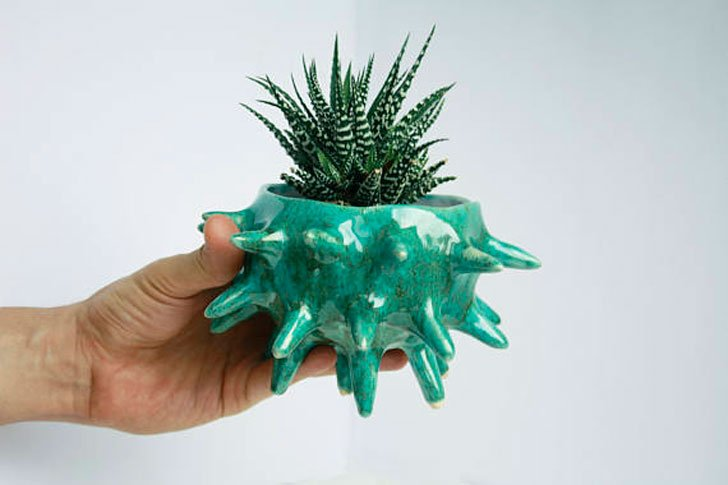Sea Urchin Pot
