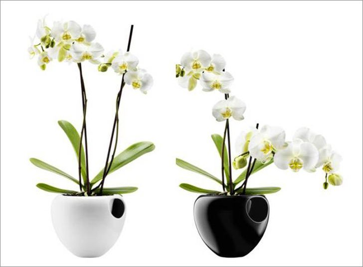 Self-Watering Orchid Pot