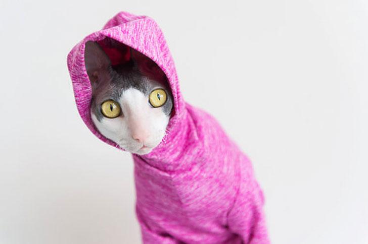 Sun Protection Cat Hoodies