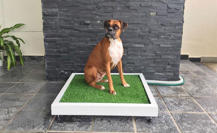 Self-Flushing Dog Toilet