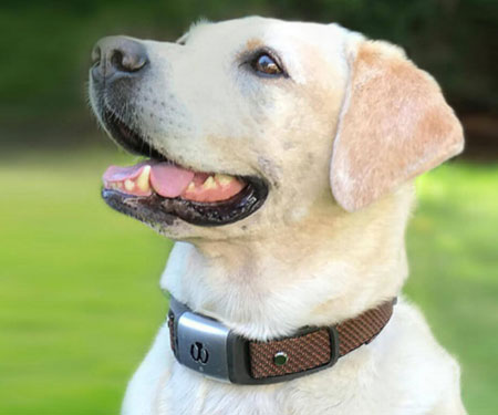 Health Tracking Dog Collars