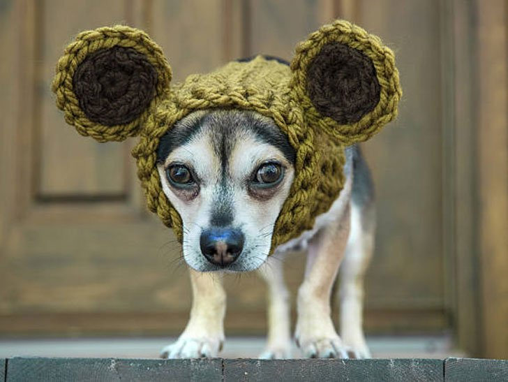 Bear Ears Snood for Dogs - Hats For Dogs