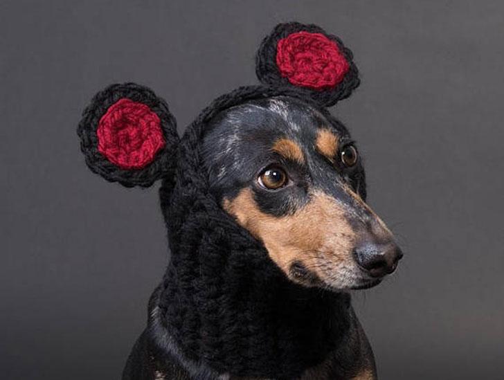 Bear Ears Snood for Dogs
