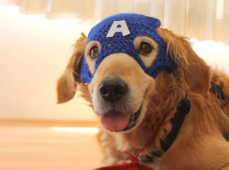 Captain American Dog Hat Mask