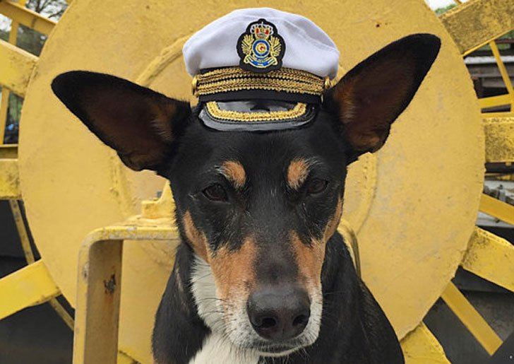 Commanding Officer Naval Hat for Dogs