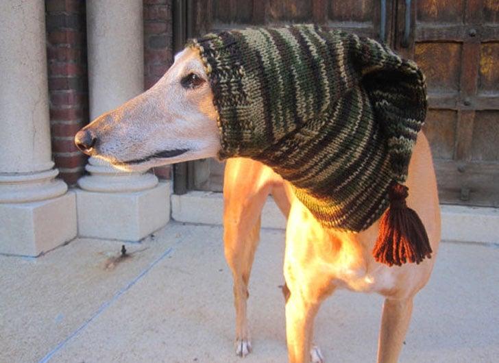 Custom Made Beanie Dog Hats