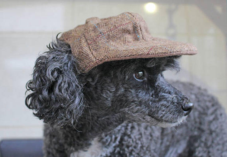 Dapper Brown Tweed Cap for Dogs - Hats For Dogs