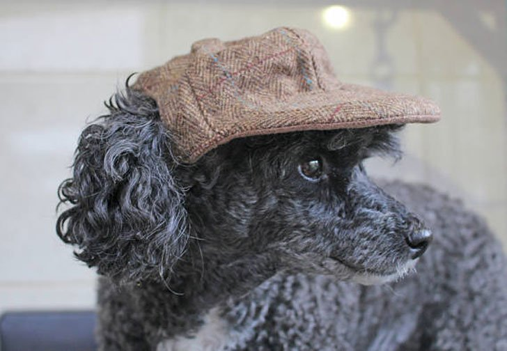 512cff0c88a 31 Cool Dog Hats For Dogs Of All Shapes And Sizes! - Awesome Stuff 365