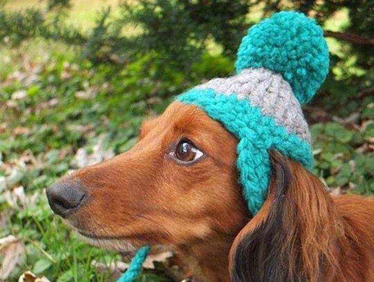 Dog Beanie with Pom Pom - Hats For Dogs