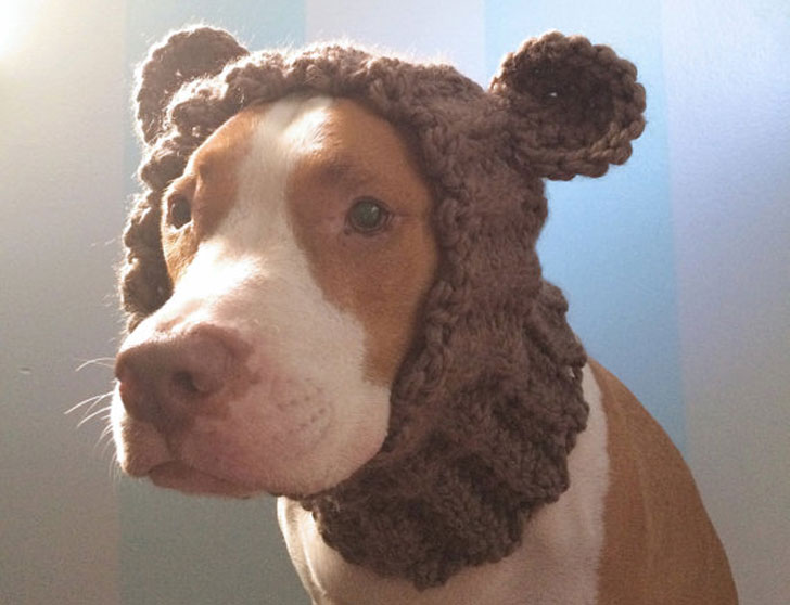 Dog Bear Cowl Hat - Hats For Dogs