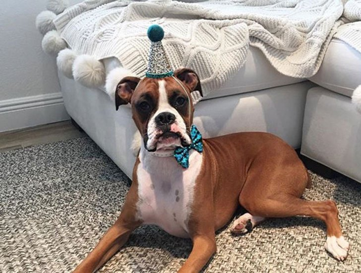 Dog Birthday Hat with Bow Tie