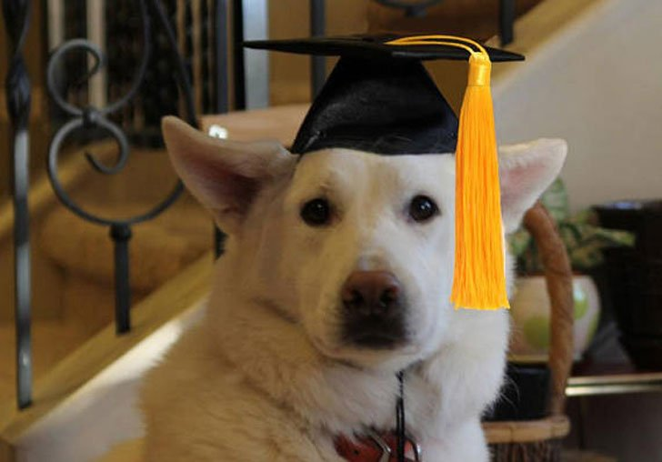 Dog Graduation Cap - Hats For Dogs