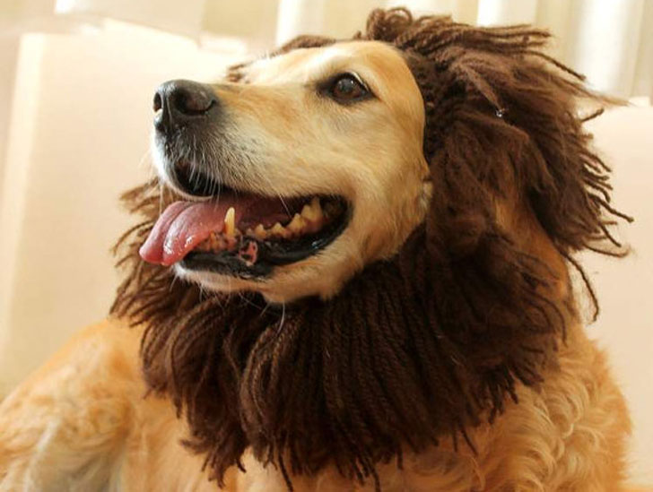 Dog Lion Hat Dog Costume