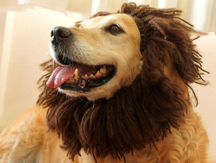 Dog Lion Hat Dog Costume