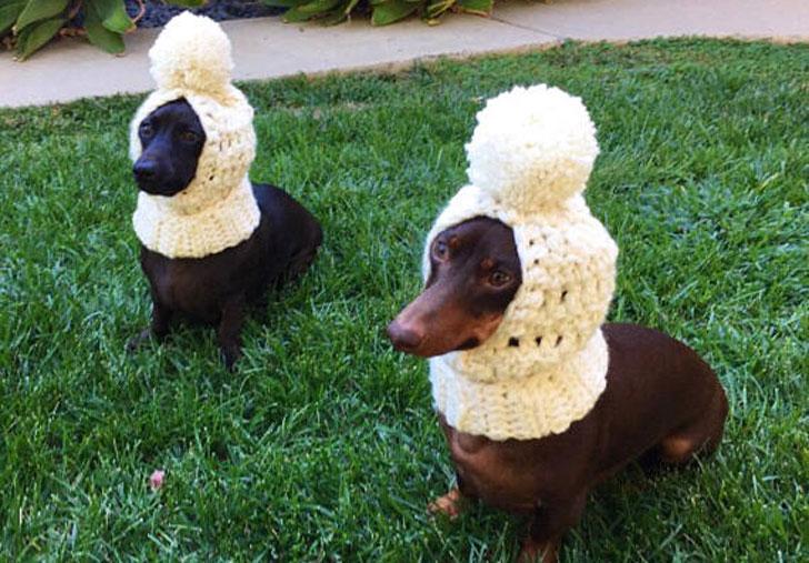 Dogs Christmas Crochet Hats