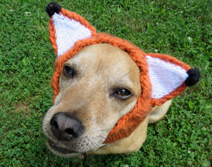 Fox Hat for Dogs