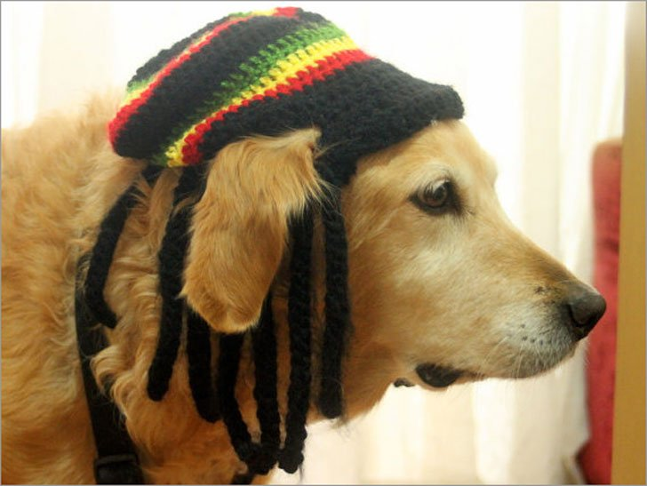 Rastafarian Dog Hat with Dreadlocks