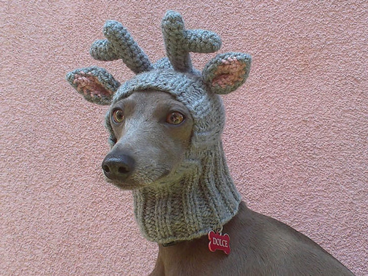 Reindeer Dog Hat - Hats For Dogs