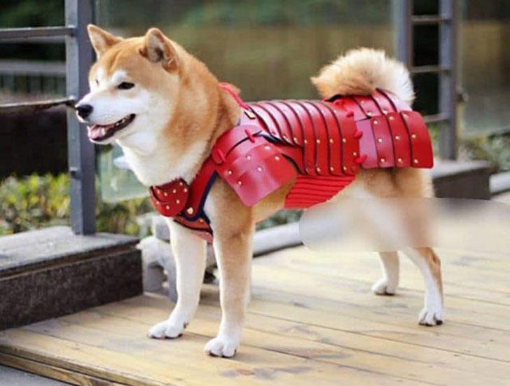 Samurai Pet Armor