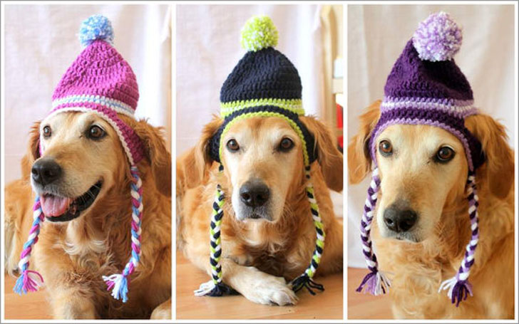 Toboggan Earflap Hats for Dogs