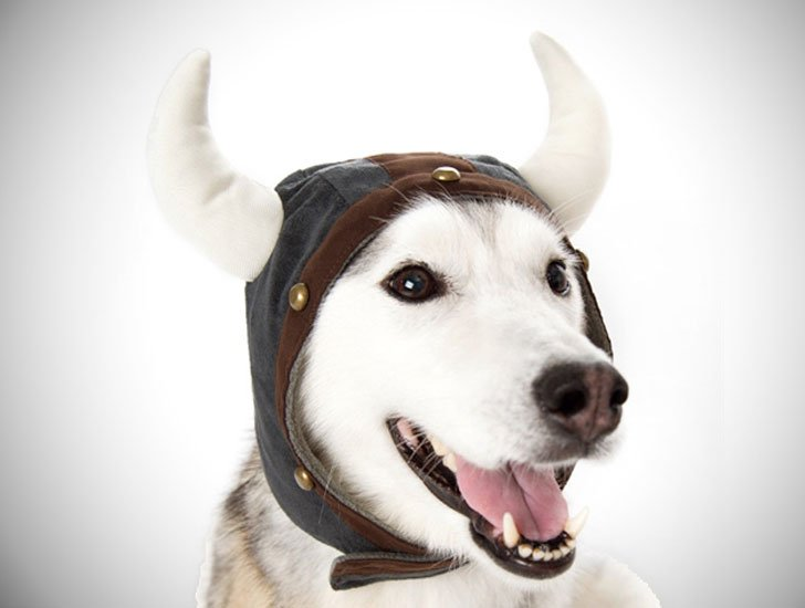 Viking Helmet Dog Hat - Hats For Dogs