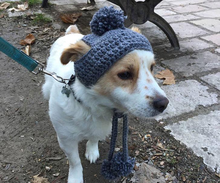 Winter Pompom Dog Hat