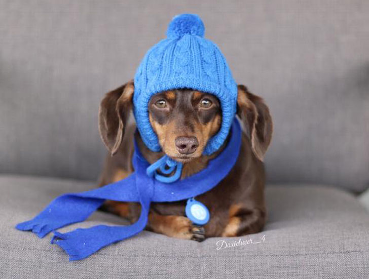 Worthy Dog Toboggan Dog Hat - Hats For Dogs