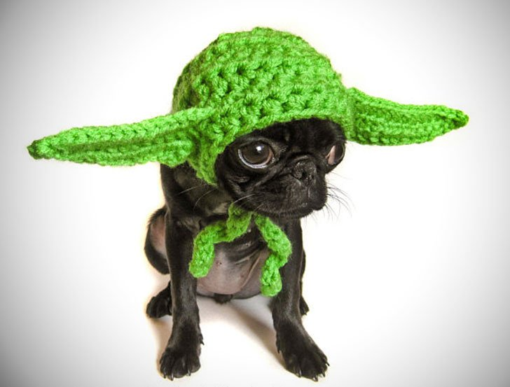 Yoda Inspired Hat for Small Dogs
