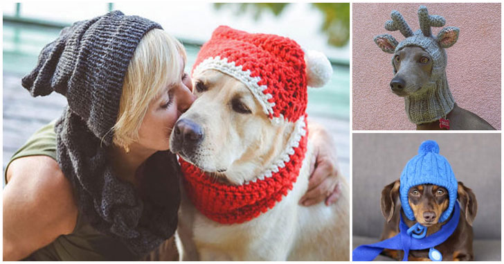 31 Cool Dog Hats For Dogs Of All Shapes And Sizes