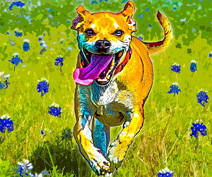 Custom Acrylic Dog Paintings