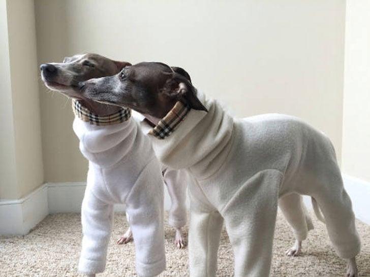 Dog Pyjamas