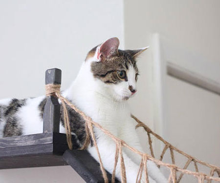 Indiana Jones Roped Cat Bridge