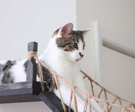 Indiana Jones Roped Cat Bridge