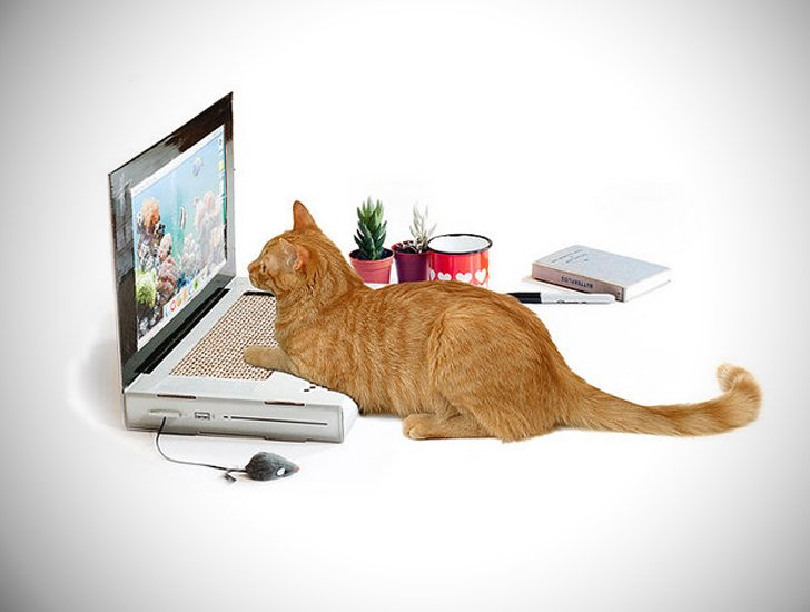 The Laptop Cat Scratching Pad