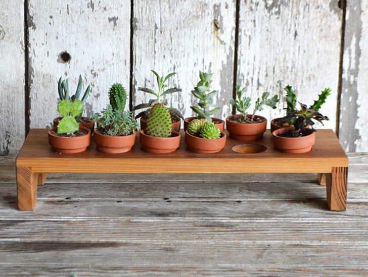 Wooden Succulent Display Stand