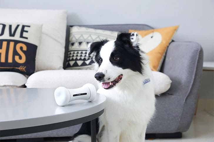 Wickedbone Interactive Smart Dog Toy