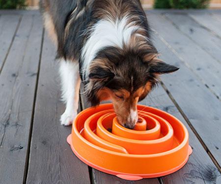 Interactive Slow Feeder Dog Bowl