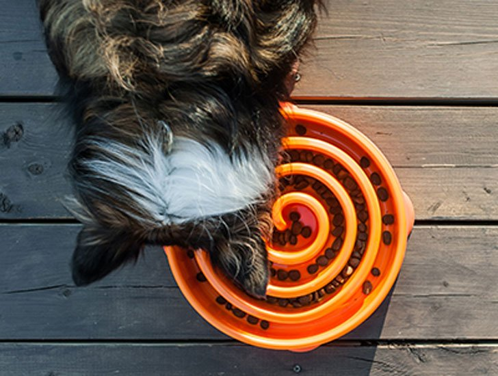 Interactive Slow Feeder Dog Bowl