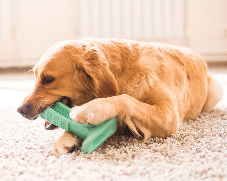How to Clean Your Dogs Toothbrush