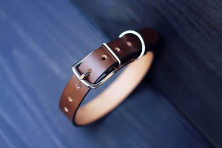 Personalized Leather Dog Collars
