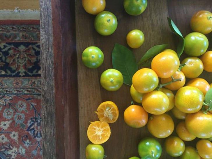 Calamondin - Calamansi Limes