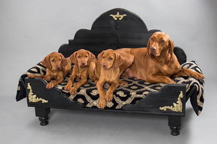 Duchess Heart Decorative Dog Bed