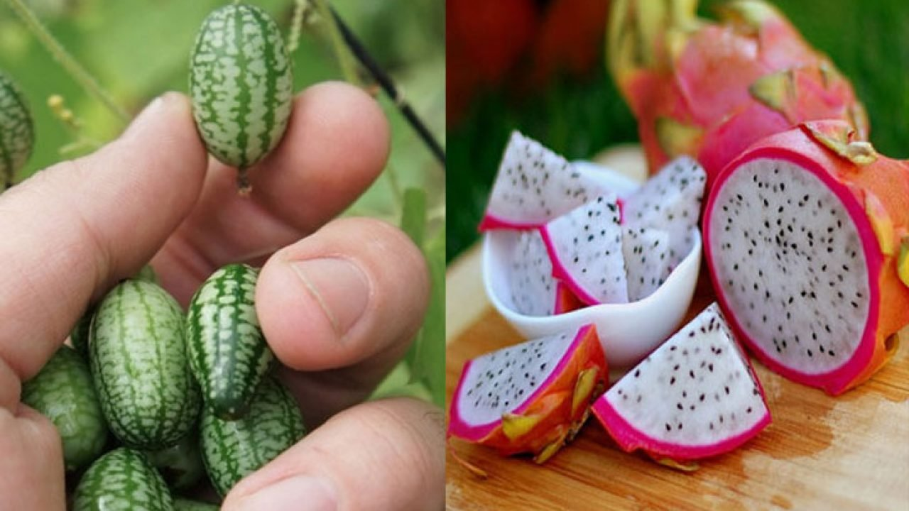27 Unusual Weird Exotic Fruit And Vegetables You Can Buy