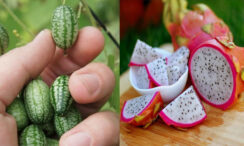 27 Unusual, Weird & Exotic Fruit and Vegetables From Around The World