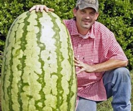 Giant Watermelon Seeds