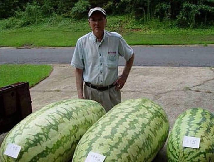 Giant Watermelon Seeds