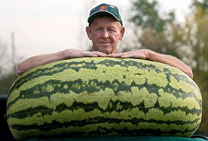 Giant Watermelon