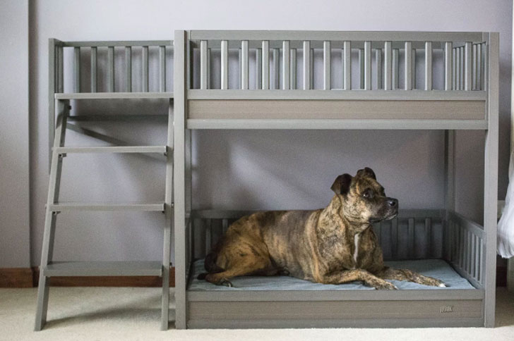 Rosalyn Bunk Bed Dog Bed - unique dog beds